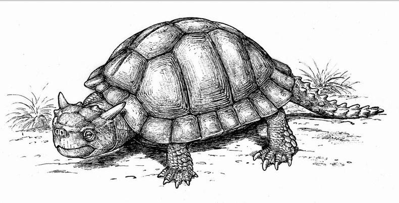 Миолания черепаха