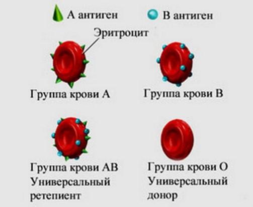 Самая редкая группа крови