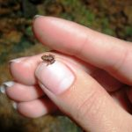 Самое маленькое животное в мире